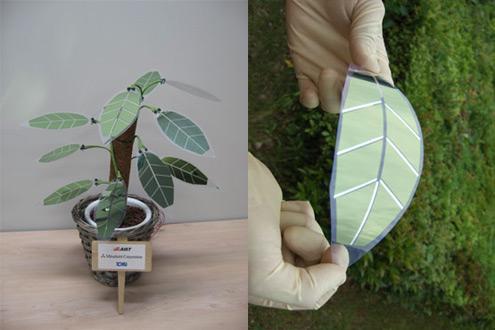 solární články jako rostliny