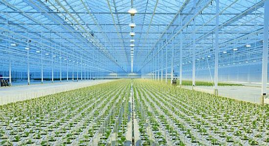 Ekologické bydlení - obrázky - zemědělství skleník Thanet Eart ve Velké Británii